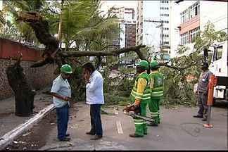 Árvore de seis metros cai em cima de caminhão, em Vila Velha, no ES - Segundo motorista, veículo foi atingido quando se preparava para estacionar.