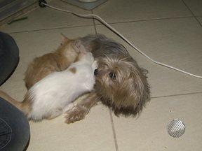 Cadelinha de Salvador adota dois gatos e dá até de mamar aos filhotes - A cadela é a mascote de uma casa no bairro de Caixa D'água.