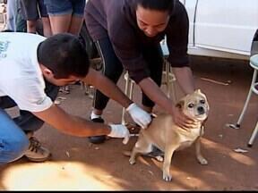 Em Patos de Minas, MG, muitos animais já foram vacinados contra a raiva - A vacinação na área urbana segue até o dia 25 de agosto.