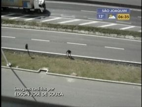 Homem mata cachorro a facadas em Barra Velha - Fato ocorreu no sábado.