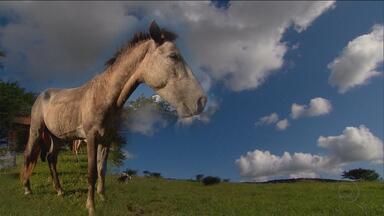 1º Bloco: Cavalo crioulo, uma das paixões do compositor, está em risco de extinção - Preferido dos vaqueiros, o animal está sendo alvo de campanhas de preservação.