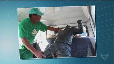 Estátua de Pelé é atropelada por caminhão em Santos - Motorista do caminhão perdeu o controle após eixo do veículo quebrar.