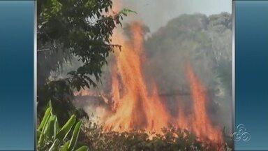 Tapauá (AM) sofre com constantes queimadas - O município de Tapauá, distante 448km, está sofrendo com as constantes queimadas que atingem, principalmente, a área rural da cidade. Locais de preservação, como a margem de igarapés de córregos, estão sendo prejudicados pelo fogo.
