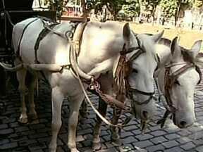 Ação da Defensoria Pública suspende passeios de charrete em Petrópolis - Segundo denúncias, os cavalos, que levam as charretes chamadas Vitórias, não estariam sendo bem tratados. De acordo com o processo, a prefeitura da cidade não estaria cumprindo várias determinações de um termo de ajustamento de conduta.