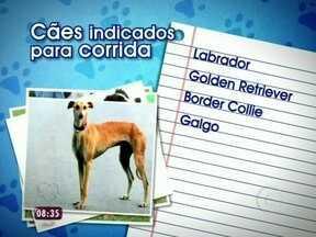 Pincher, labrador e até vira-lata: veja raças indicadas para praticar o Canicross - Se você tem um desses cãezinhos, comece a se exercitar agora mesmo