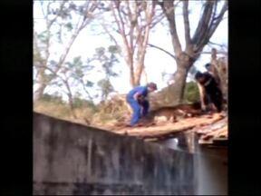 Vaca fica presa em telhado de casa em Jaú - Em menos de um mês, os moradores do bairro Santa Helena em Jaú (SP) viveram duas situações semelhantes e bastante curiosas. Na manhã desta terça-feira (11), uma vaca ficou presa no telhado de uma casa do bairro e destruiu parte da estrutura do imóvel