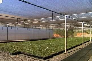 Sombrite e estufa podem ser usados em viveiros de mudas - Para escolher o melhor ambiente das mudas é preciso conhecer bem cada espécie que será plantada. O sombrite reduz o a entrada de sol no ambiente. Já a estufa permite a entrada da luz solar, mas bloqueia o vento e a água da chuva.