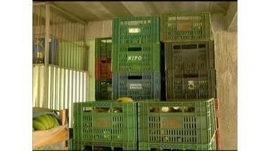 Produtores participantes do banco de alimentos recebem valor fixo pelas mercadorias - Além disso, eles agora possuem um lugar certo para a venda, possibiltando maior investimento nas lavouras.