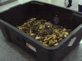 Composteira doméstica é uma ótima solução para tratar o lixo orgânico - A composteira é uma excelente maneira de aproveitar os restos de alimentos produzidos em residências. Além de destinar de forma correta o lixo orgânico, a composteira ainda gera o húmus, um fertilizante natural perfeito para adubar plantas.