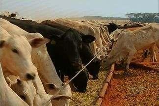 Alta do boi anima criadores de Jatái, em Goiás - A alta do boi nos últimos dias animou os criadores de gado que investiram mais no sistema de confinamento. Em Jataí, no sudoeste do estado, tem pecuarista que aumentou em 50% o número de animais.