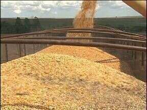 Resultados positivos da safrinha de milho incentivam cooperativas a retomar exportações - Segundo a Companhia Nacional de Abastecimento, a produção brasileira de milho vai chegar a 78 milhões de toneladas.