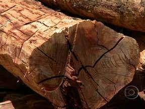 Operação apreende madeira extraída ilegalmente no Piauí - A operação foi realizada pela polícia em parceria com a secretaria do meio ambiente do Piauí. Armas que seria usadas para caçar animais também foram recolhidas. Foram apreendidas 120 toras de Aroeira.