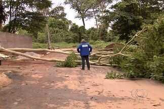 Depois da seca, chuva causa estragos em vários bairros de Goiânia - E nesta manhã alguns moradores ainda estavam sem luz. Nos bairros árvores e postes de energia estavam no chão.