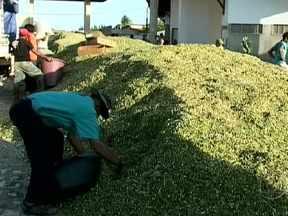 Tempo permanece seco no Rio Grande do Norte - Os criadores do estado estão recebendo ajuda para alimentar o rebanho que sofre com a falta de água a alimento.