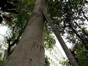 Condomínios temem que árvores caiam - Os condomínios, um na Saúde, na Zona Sul, e outro em Santana, na Zona Norte, não podem mexer no jardim sem a autorização da prefeitura. Marcio Rachkosky ressalta que a prefeitura não tem o número necessário de agrônomos.