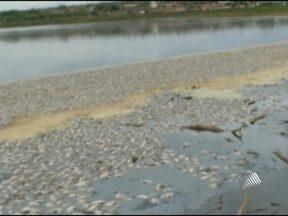 Milhares de peixes mortos aparecem em lago na cidade de Paramirim - Segundo a prefeitura, o nível de água do lago está muito baixo por causa da seca e com isso faltou oxigênio para os peixes.