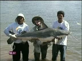 Relembre: Ana Maria fisga peixe de 80 quilos em pescaria no Sul do Pará - Mais Você também relembra participação antiga de Leonardo no programa
