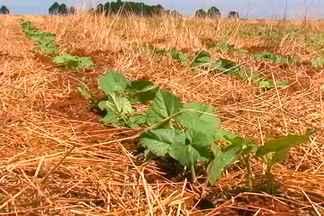 Produtores de feijão do PR reduzem área de plantio nesta safra - Eles receiam a instabilidade do clima e que os preços do mercado não seja compensadores.