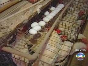 Preço do ovo reage na maior região produtora do país - Após dois meses em queda, o preço do produto reagiu no centro-oeste de São Paulo. A caixa com 30 dúzias agora sai a R$ 56, 10% a mais que há um mês. Os produtores dizem que essa reação se deve a perda de aves devido o forte calor.