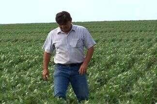 Aumenta produção de soja em MS - A produção de soja em Mato Grosso do Sul deve chegar a 3 mil quilos por hectares em 2013.
