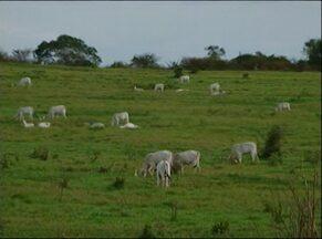Criadores de gado de Itapetinga comemoram números do mês de novembro - Período de chuvas favoreceu as pastagens, recuperando o gado. Preço da arroba subiu cerca de 10%.