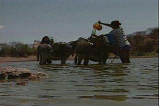 As longas jornadas em busca de água dos sertanejos da Paraíba - Muitos dos reservatórios estão secos ou em situação crítica.