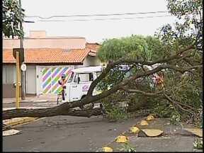 Tempo fecha no meio da tarde e ventania derruba árvores em Bauru - Em Bauru (SP), uma forte ventania atingiu a cidade nesta sexta-feira (21). O tempo fechou por volta das 15h30 e o vento foi suficiente para derrubar uma árvore com raiz e tudo. Spesar dos estragos não há registro de feridos.