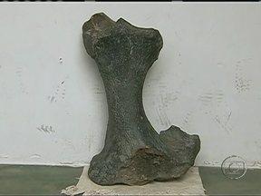 Descoberta de fósseis de animais desperta curiosidade de moradores de Pesqueira (PE) - Os agricultores encontraram grandes ossos de animais enquanto aprofundavam uma barragem. De acordo com uma bióloga da UFPE, os fósseis não são de dinossauros, mas de outros animais pré-históricos.