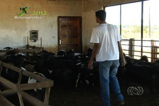 Veja alguns dos principais destaques do Jornal do Campo em 2012 - A retrospectiva mostra que agricultores de melancia lucram e comemoram muito a produtividade do fruto no ano passado. Além disso, o JC mostrou como funciona a criação de cordeiros.