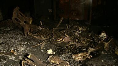 Curto-circuito pode ter causado incêndio em museu de universidade em BH - Apesar de o fogo ter atingido todo o segundo andar, boa parte do acervo está preservada.