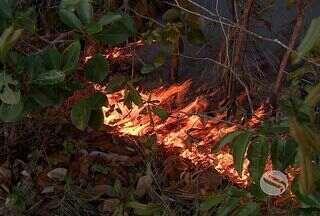 Incêndio atinge o Parque Nacional da Serra de Itabaiana, em SE - segundo o brigadista as chamas estão altas e já atingiram cerca de 50 hectares de mata. Além dos 14 brigadistas, 10 voluntários juntamente com o Corpo de Bombeiros tentam contorlar as chamas. Uma aeronave também ajuda no combate ao fogo.
