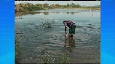 Chuva forte no Sertão do Pajeú traz esperança para o sertanejo - O pasto está brotando e a terra começa a ser preparada para receber as sementes de milho e feijão.