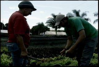 Projeto 'Fazendinha Comunitária' em Três Marias gera renda e melhora condições de vida - Projeto 'Fazendinha Comunitária' em Três Marias gera renda e melhora condições de vida.