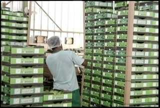 Lançada a marca Jaíba que é o selo dos produtos da região - Lançada a marca Jaíba que é o selo dos produtos da região.