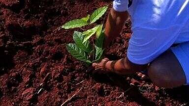 Produtores rurais recebem mudas para recuperar margens de córrego - Pequenos produtores rurais de uma comunidade de Tangará da Serra receberam mudas de árvores para plantar e tentar recuperar as margens de um córrego que corta a região.