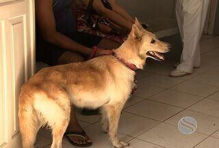 Centro de Zoonoses de Aracaju deixa de custodiar animais provisoriamente - A decisão é do Ministério Público de Sergipe que disse que o local funciona sem obedecer as portarias do Ministério da Saúde.