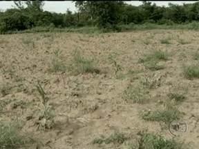 Quantidade de chuva no norte de Minas Gerais ainda não é suficiente - A chuva voltou depois de meses de estiagem, mas a quantidade de água não foi suficiente para recuperar as barragens e o desenvolvimento das lavouras. Agricultores persistentes e esperançosos já começam o plantio no campo.