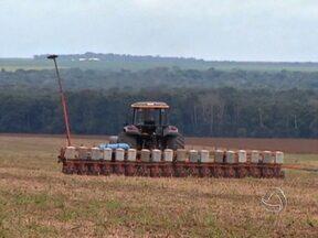 Plantio de milho atinge 10% da área estimada na safra de MT - No norte e médio norte de Mato Grosso, a plantação do milho está adiantada. Segundo o Imea, o plantio atingiu 10% da área estimada para a segunda safra.