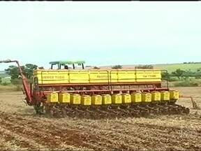 Agricultores de GO falam com cautela dos números esperados para a safra da soja e do milho - Por causa da chuva, o plantio do milho está atrasado em Jataí. Os produtores já veem queda na produtividade da lavoura. Agricultores precisam combater as pragas que surgem nas lavouras.