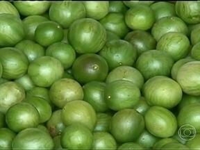 Falta de chuva atrapalha safra de umbu na Bahia - A oferta do fruto de gosto forte e sabor azedo caiu 80% devido a estiagem prolongada, em 2012. Cooperativas de produtores conseguiram montar um estoque da polpa para o beneficiamento do umbu.