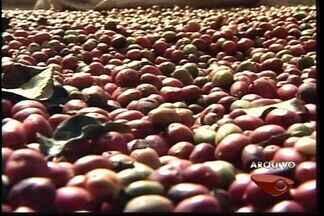 Produtores de conilon no ES querem melhorar a qualidade do café - Encontro Estadual do Conilon Descacado incentiva produtores em Santa Teresa.