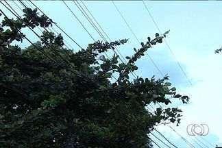 Homem leva choque enquanto poda árvore, em Goiânia - O acidente aconteceu em uma rua do setor Serrinha, em Goiânia. O homem, de 44 anos, podava uma árvore, que fica em frente à casa dele, quando recebeu uma descarga elétrica.