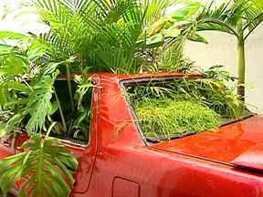 Carros abandonados e caçambas são usados para chamar a atenção do verde em São Paulo - Em São Paulo faltam espaços verdes, árvores e jardins para purificar o ar e deixar a cidade mais bonita. Nas ruas, algumas ações bem curiosas querem chamar a atenção para essa necessidade.