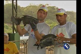 Feira oferece pescado a menor preço no Pará - Feira oferece pescado a menor preço no Pará