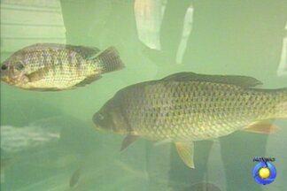 Nutricionista fala sobre os valores nutricionais dos peixes - Entenda porquê eles fazem bem à saúde.