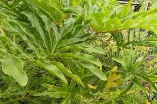 Botânico mostra opções para fazer um telhado verde - Com as novas tecnologias, qualquer tipo de planta pode ser usado para fazer um telhado verde. Uma das sugestões é usar plantas raras do serrado.
