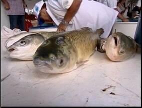 20ª edição da Feira do Peixe é realizada em Teófilo Otoni - Este ano, cerca de 80 comerciantes participam da feira.