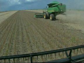 Chuva prejudica o trabalho nas lavouras de soja do Mato Grosso - Colheita está na reta final, mas a chuva não dá trégua. No principal estado produtor, os agricultores já fazem um balanço da safra.
