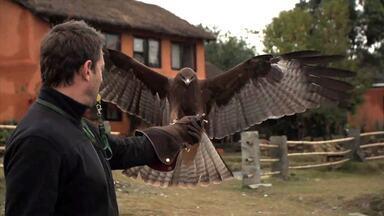 Bastidores: Cristian Dimitrius faz treinamento de falcões - Veja o vídeo exclusivo da arte da falcoaria com um especialista do Nepal