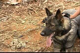 Corpo de Bombeiros do ES treina 12 cães para auxílio em operações - Segundo o órgão, cada um deles consegue ser mais rápido do que 30 bombeiros na hora de localizar uma pessoa perdida ou soterrada.